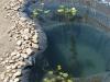 A tó part kialakítása, és az első növények