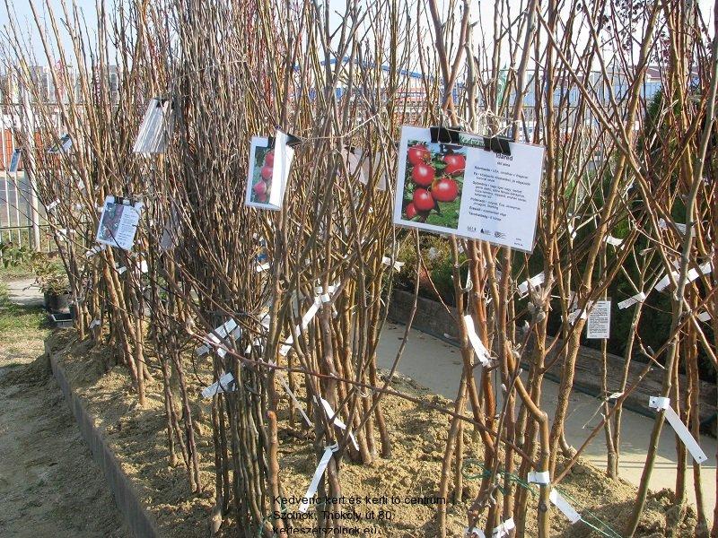 Gyümölcsfa csemeték