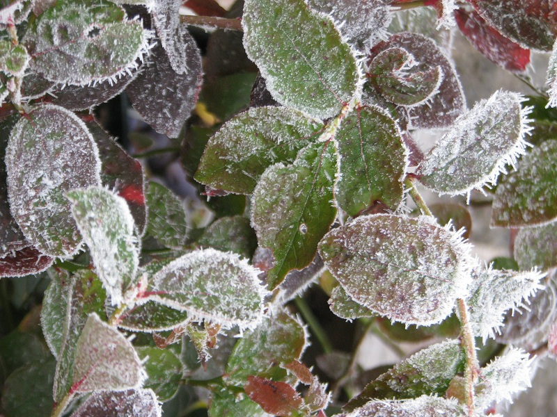 Apro téli szépségek