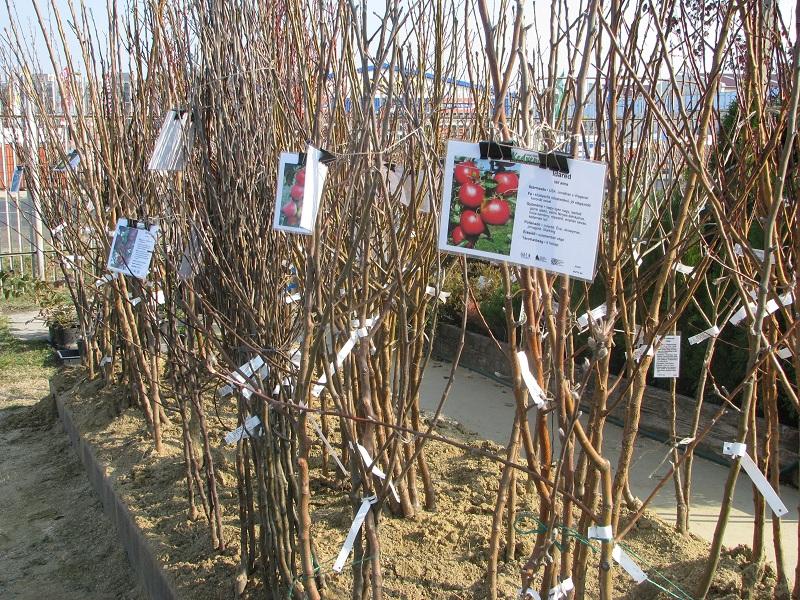 Itt a szabadgyökeres gyümölcstermők tavaszi ültetési szezonja
