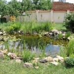 Kedvenc -szolnoki kertészet- ahol a kerti tó álmok valóra válnak
