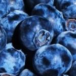 Kék áfonya fajták, bogyósgyümölcs fajták