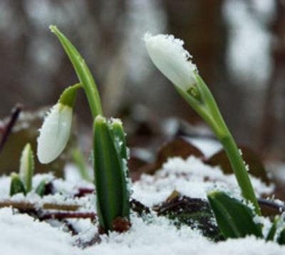 Vigyázz, kész, tavasz! Nyitunk!