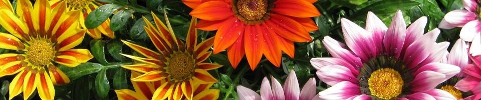 Kedvenc kert és kerti tó centrum - … és büszke lesz a kertjére