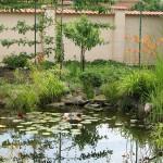 Természetes kerti tó part