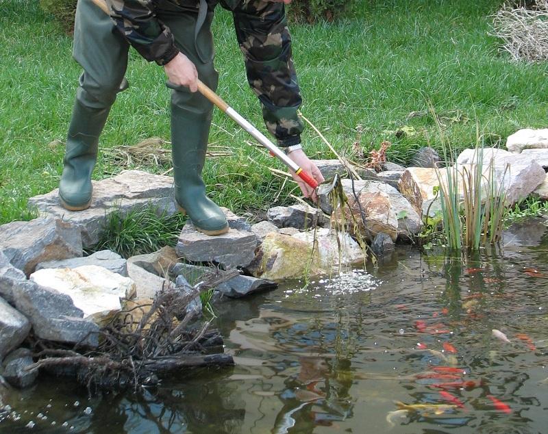 El kell távolítani az elpusztult növényi részeket a kerti tóból