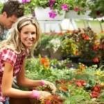 kertészeti eladó állás