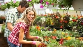 kertészeti állás