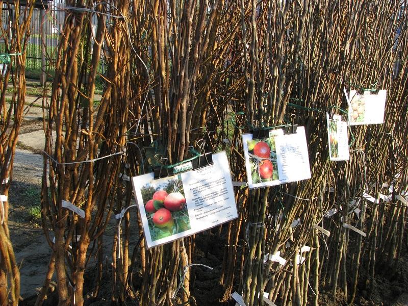Ha gyümölcstermőket szeretne ősszel ültetni...