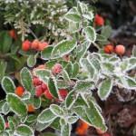 Télen is szép kert