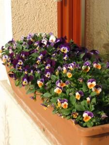 Virágözönhöz rendszeresen tápanyag kell