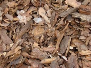 talajtakarás egyik anyaga a fenyőkéreg