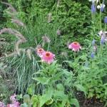 nyári évelő növények