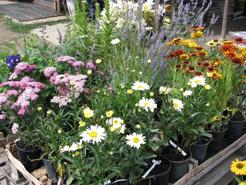 Így könnyű választani: folyamatosan frissülő, mindig virágos, bimbós kínálat