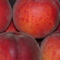 Crimson törpe őszibarack