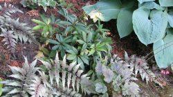 évelő növény fajták