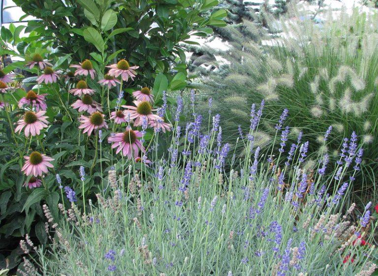 Nyári kerti tippek a Presztízsben