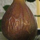 Keszthelyi barna füge