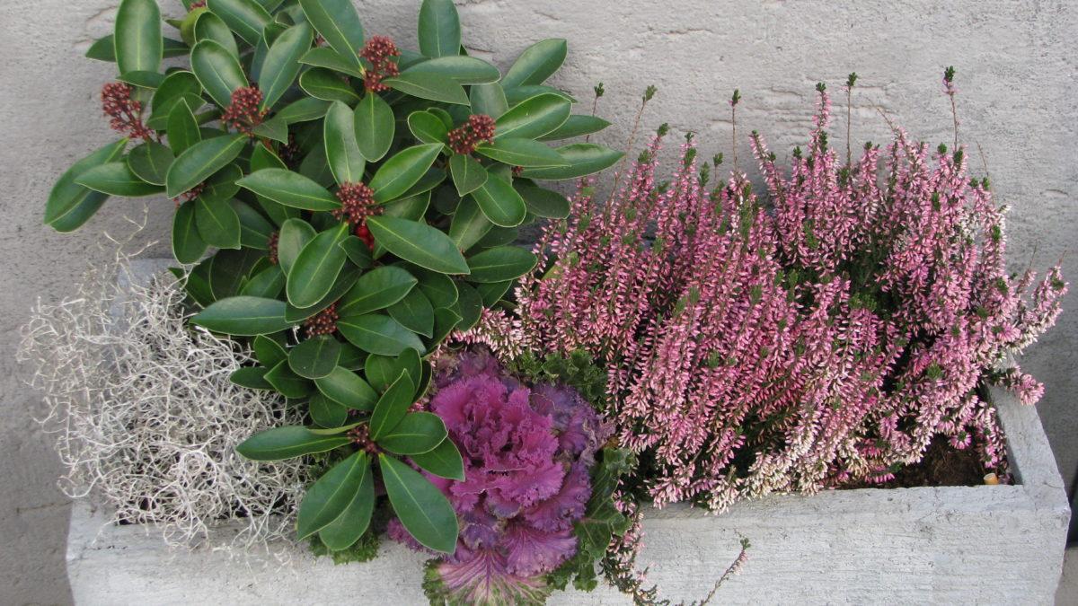 Őszi, téli hangulatos növény beültetés