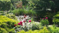 Különböző örökzöld fajták egy kertben