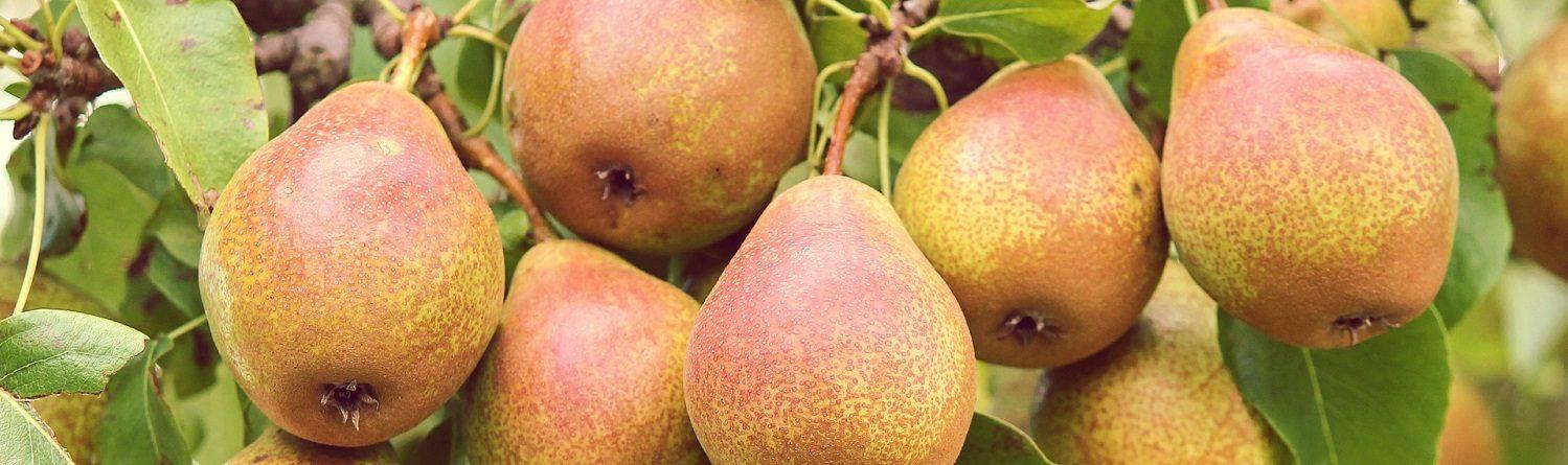 Gyümölcstermők Webáruháza